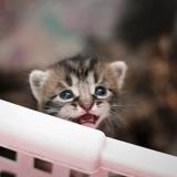 Comment bien accueillir un chaton non sevré ?