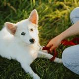 Je viens d'adopter un chiot : comment l'aider à s'adapter à sa nouvelle vie ?