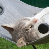 7 astuces pour rafraîchir votre chat l'été