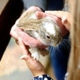 Comment aider efficacement son lapin à faire face à la chaleur ?