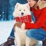 Je pars à la montagne avec mon chien pour les vacances d'hiver