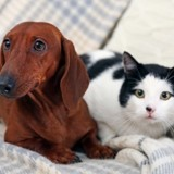 Vacances d'été : comment faire garder son chat ou son chien lorsqu'on part sans lui ?
