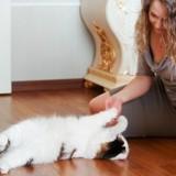5 bonnes raisons de jouer avec son chat