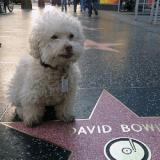 Le tour du monde du chien Cerbero, un globe-trotter infatigable