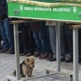 Déchirant : depuis les funérailles de son maître, ce petit chien se rend quotidiennement sur sa tombe