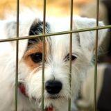 Cet été, 60 000 animaux seront abandonnés sur la route des vacances