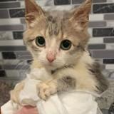 Le chaton « le plus mignon du monde » a un secret qui éblouit toutes les personnes qu'il croise