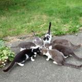"""Association Chalonn : """"Pour une adoption réussie, le chat et l'adoptant doivent être en parfaite harmonie"""""""