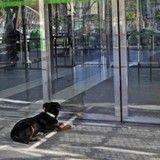 Interdit d'accès par l'hôpital où est admis son maître, un chien bouleverse le monde entier