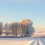 Le vétérinaire soigne une vache dans une ferme : il voit une ombre marcher dans la neige et se met à courir