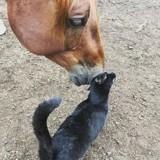 L'improbable histoire d'amitié entre un chat et un cheval (Vidéo)
