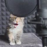 Le chant des chatons (Vidéo du jour)