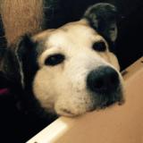 Après avoir vécu pendant 10 ans dans un parc, le chien Charlie trouve enfin une famille