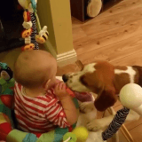 Charlie le Beagle, le meilleur baby-sitter au monde (Vidéo du jour)