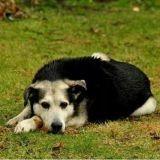 Elle sauve un chien en passant deux nuits près de lui dans le froid glaçant
