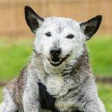 Ils abandonnent leur chien âgé de 16 ans, jamais ils n'auraient imaginé ce qu'il est devenu
