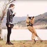Une ancienne chienne battue rejoint le bouleversant duo d'Incroyable Talent