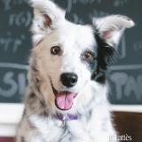 Chaser : découvrez un extrait du livre sur l'incroyable chien qui comprend plus de 1000 mots