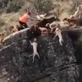 Cette vidéo d'un chasseur et de ses chiens fait scandale sur Internet