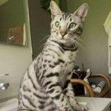 Un chat abattu par un chasseur « volontairement » !