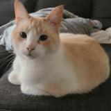 Un chat de 12 ans qui a passé la moitié de sa vie au refuge trouve (enfin) un nouveau foyer