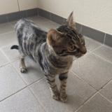 À Strasbourg, un chat miaule par la fenêtre, les policiers appelés par les voisins découvrent le pire