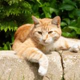 A Cannes, 23 chats profitent d'une vie paisible dans une maison de retraite dédiée