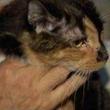 Ce chat a parcouru 300 kilomètres pour rentrer chez lui !
