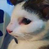 Ce chat avec 4 oreilles fait fondre tout le monde (Vidéo du jour)