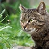 Comment réagir si mon chat se fait piquer par une guêpe ou une abeille ?