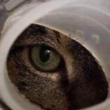 Ce chat a été abandonné dans un endroit où personne ne pouvait le voir (Vidéo)