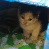 10 chats avant / après leur adoption : leur métamorphose est bouleversante