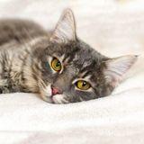 Confinement et chat malade : quand faut-il l'emmener chez le vétérinaire ?