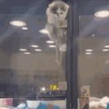 Ce chat qui vit dans une animalerie escalade sa cage pour rejoindre son copain chien (Vidéo)