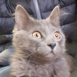 Il plonge la tête de son chaton dans un aquarium pour « le dresser », mais ce n'est pas le pire !