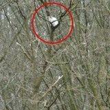 Un chat coincé dans un arbre depuis une semaine, sauvé grâce à une association
