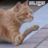 Ce chat qui marche sur ses coudes reçoit enfin de l'aide (Vidéo)
