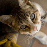 Comment nos émotions agissent-elles sur le comportement de nos chats