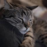 Après les bars à chat, voici venu le cinéma à chats !
