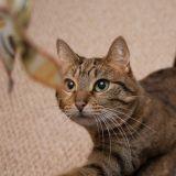Le chat d'appartement et le jeu : comment le stimuler et avec quels jouets ?