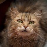 Votre chat a des problèmes de comportement ? Il suffit parfois de peu pour l'aider