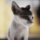Un moine bouddhiste condamné pour avoir sauvé la vie d'un chat
