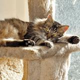 5 conseils pour faire face à la mue printanière du chat