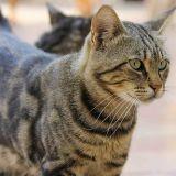 Pourquoi la routine est-elle si importante pour le chat ?