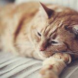Les bienfaits du ronronnement du chat, sur lui, et sur nous