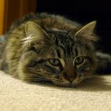 Quels sont les situations stressantes pour le chat et les moyens de l'apaiser ?