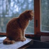 Votre chat est stressé ? Des chercheurs vous donnent des solutions