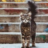 Son chat sort d'une cachette la queue toute gonflée : elle se baisse pour regarder et a la frayeur de sa vie