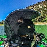 Ce chat avait peur de tout le monde jusqu'à ce qu'il devienne un vrai aventurier (Vidéo du jour)