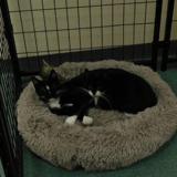 Un refuge recueille trois chats : le trio devient inséparable à cause d'un handicap